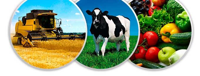 Обсяг продукції сільського господарства Черкаської області зріс на п'ять відсотків