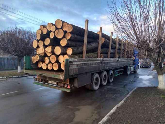 За розтрату держмайна на Черкащині судитимуть керівника ДП «Уманське лісове господарство»