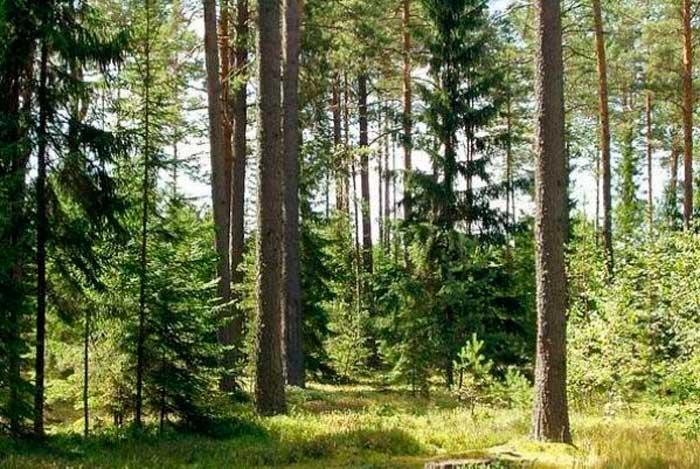 За незаконну порубку дерев жителю Золотоніського району оголошено підозру