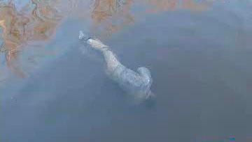 На Канівщині потонув чоловік. Одного вдалося врятувати