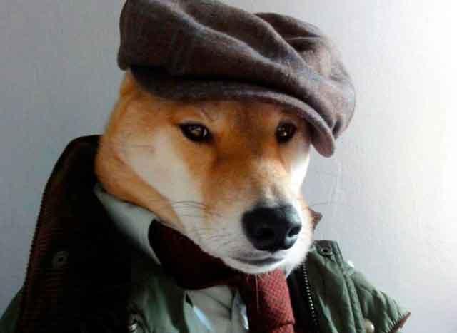 Собака стала моделью мужской одежды