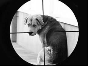 У Черкасах почали масово труїти собак