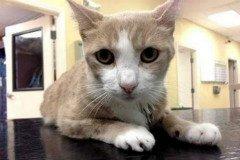 Собака стала донором крові для кота
