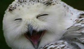 Британська компанія буде доставляти книги совами