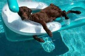 Для домашніх тварин відкрили спеціальний пляж в Греції