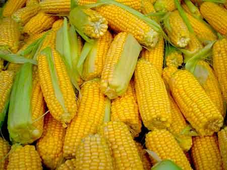 Або кукурудза, або гроші!