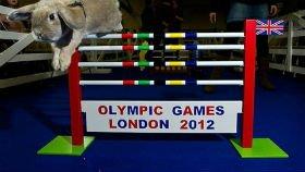 У Британії проходить олімпіада серед кроликів