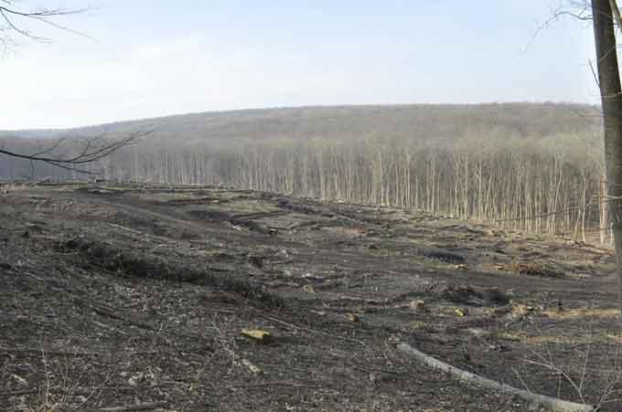 У Холодному Яру знищують ліс (фото)