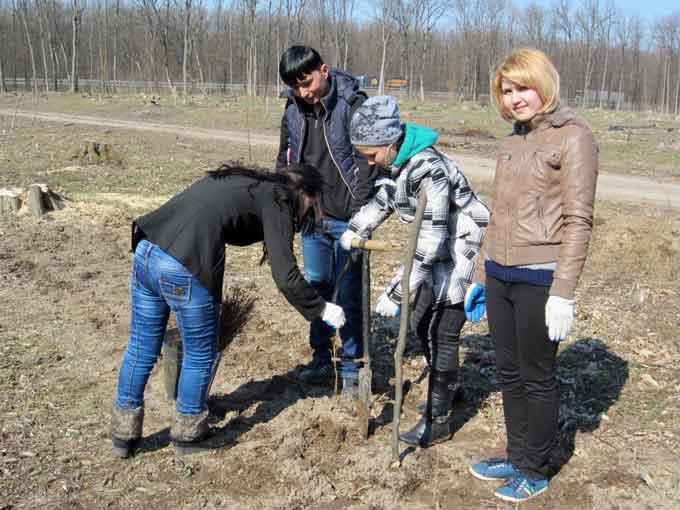У Собківському лісництві висадили 1428 саджанців модрини