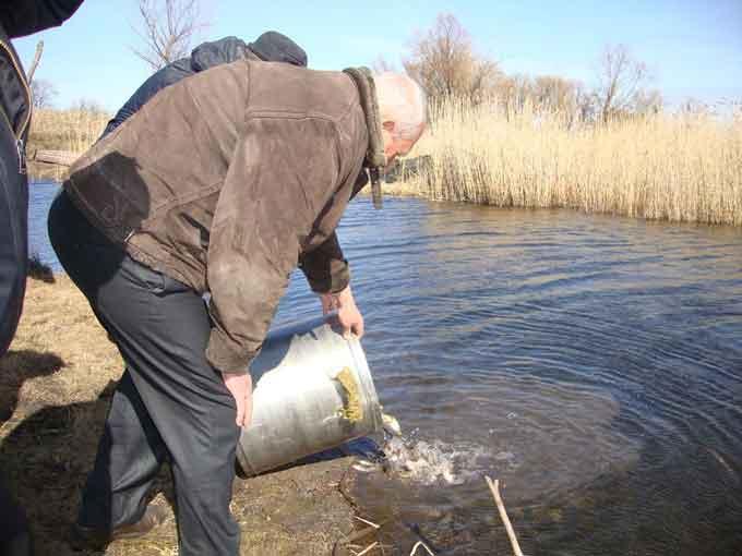 Жителі селища Чорнобай рятують річку гуртом: у водойму випущено тонну мальків коропа та білого амура