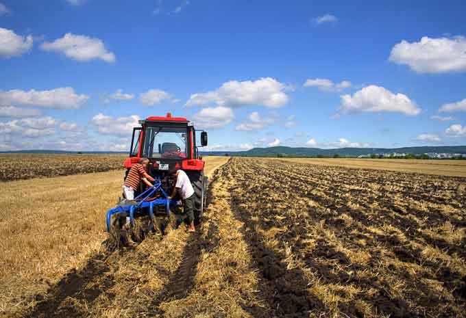 Черкасские аграрии предупреждают: продукция нового урожая будет дороже