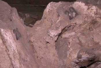 Кістки мамонтів, яким 15 тисяч років, у селі Межиріч