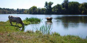 У Звенигородському районі підприємець незаконно користувався землями водного фонду площею 35 га