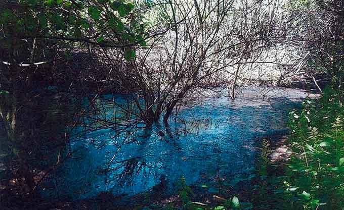 Городищенське підприємство за забруднення лісу чорною речовиною оштрафували аж на 9 грн