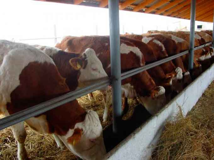 Розвиток галузі тваринництва в Драбівському районі