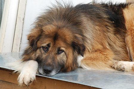 У Чигирині масово потруїли собак – безпритульних і домашніх