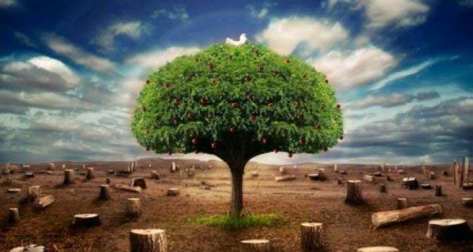 На Звенигородщині невідомі знищили 14 дубів
