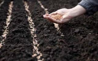 Аграрії Черкащини завершили посів основних сільськогосподарських культур