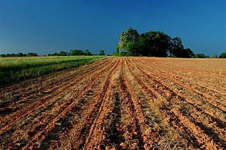 Сівба озимини під урожай 2016 року на Черкащині ускладнюється засухою