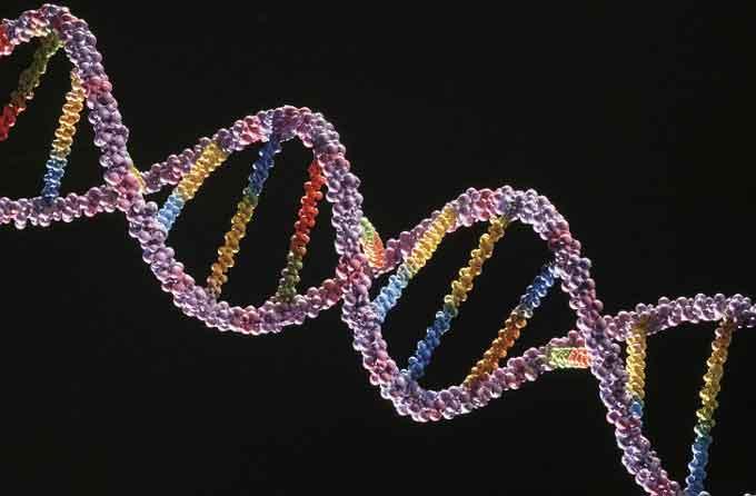 ДНК і гени
