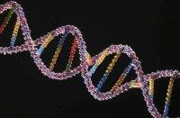 Генетики розповіли, чи успадковують діти шкідливі звички батьків