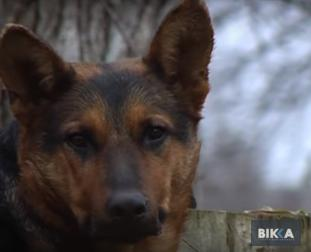 Черкаський Хатіко переїхав з міста у село (відео)