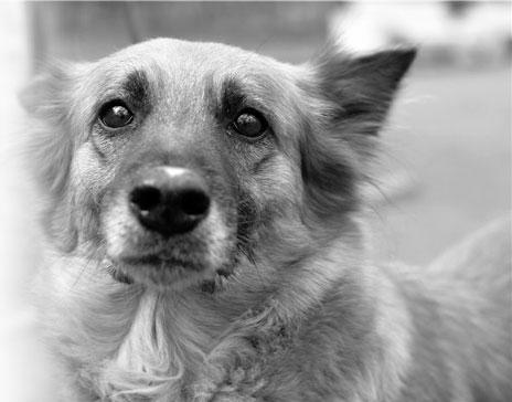 Три місяці пес чекає господаря, який викинув його з машини