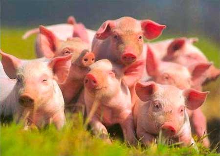 Стан тваринництва Кам'янського району за січень-вересень 2016 року
