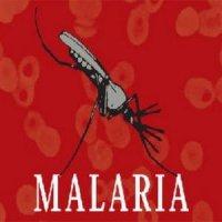 """На Черкащині зафіксували два випадки малярії – хворобу """"привезли"""" з Африки"""