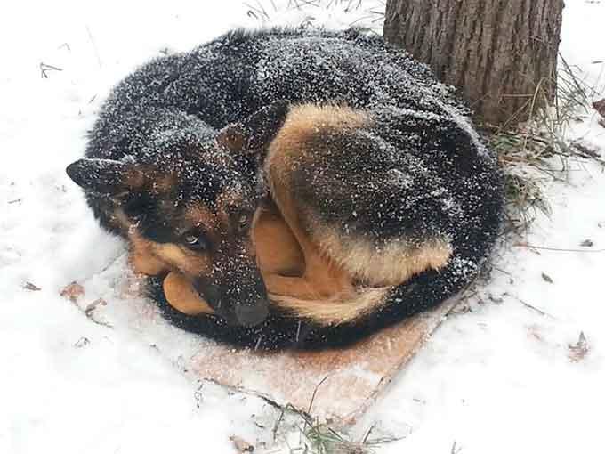 У Черкасах для собаки, яка лежить на одному місці, шукають господаря