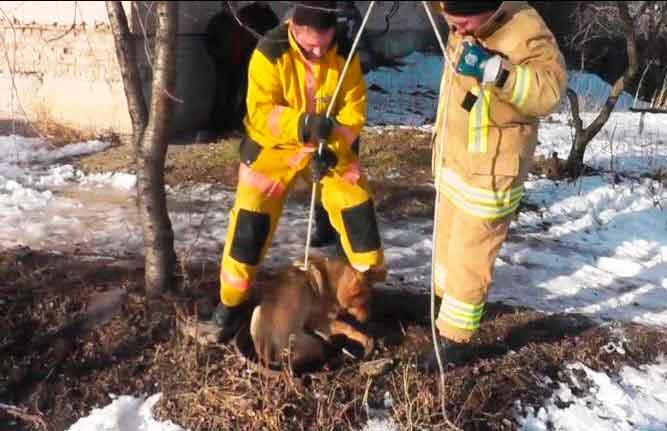У Шполі з технічного колодязя врятовано собаку (відео)