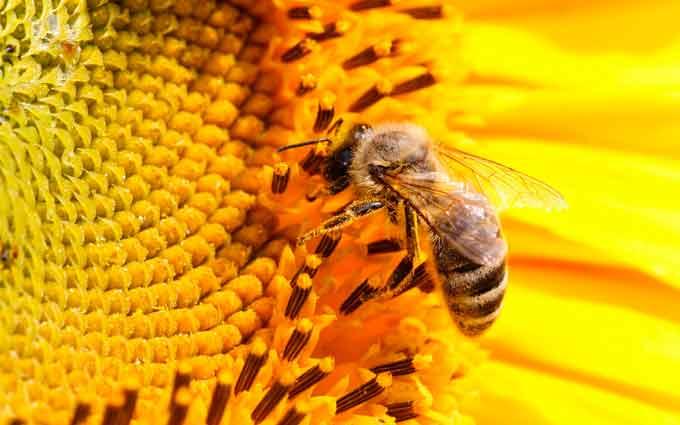 В Шполянському районі масово гинуть бджоли