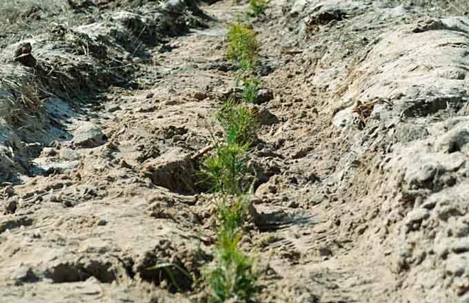 Лісівниками Черкащини створено 1660 гектарів молодих лісів