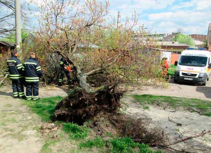 У Черкасах дерево привалило чоловіка