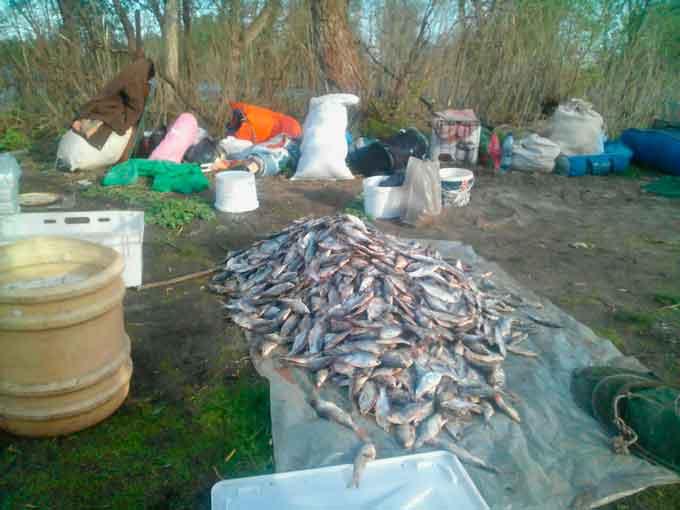 На Черкащині в іхтіологічному заказнику браконьєри наловили риби на 306 тисяч