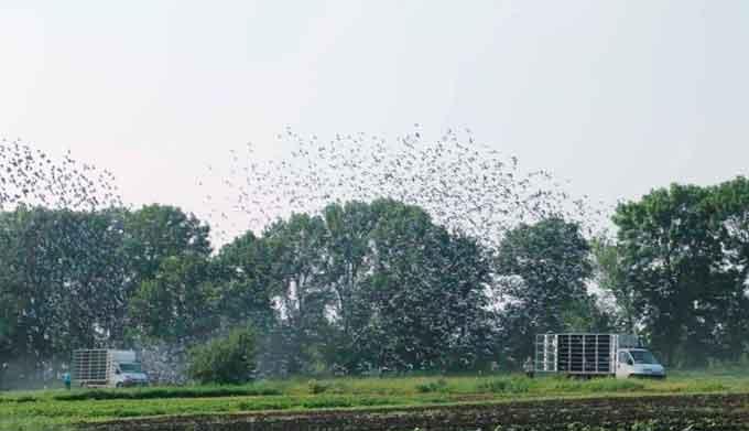 12 тисяч голубів піднялися в небо над Леґедзиним