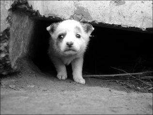 У Черкасах з'явиться Програма поводження із безпритульними тваринами