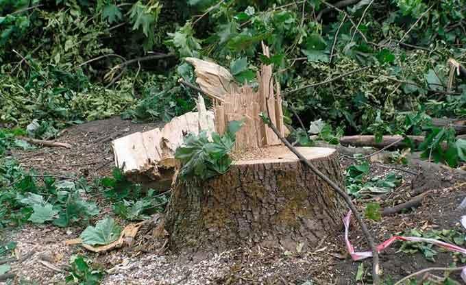 суцільна вирубка ділянок лісу