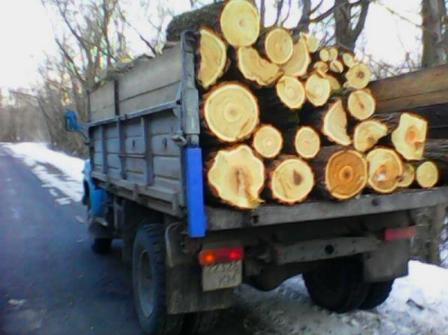 Активісти виявили незаконну вирубку лісу на Канівщині і переконують, що до неї причетний сільський голова Пшеничників Сергій Мотриченко.