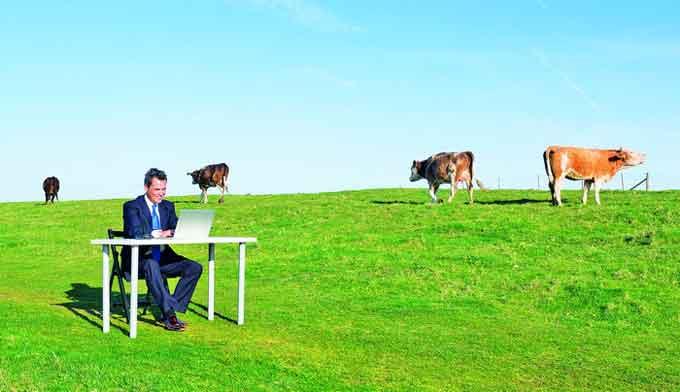 В Черкаській області зростає кількість фейкових фермерських господарств