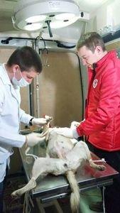 Міжнародна благодійна організація  «Чотири лапи» допомагає Черкащині вирішувати проблему безпритульних тварин