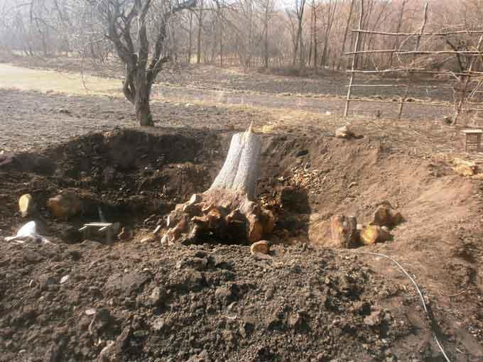 У Катеринополі рятувальники деблокували тіло чоловіка, якого привалило деревом