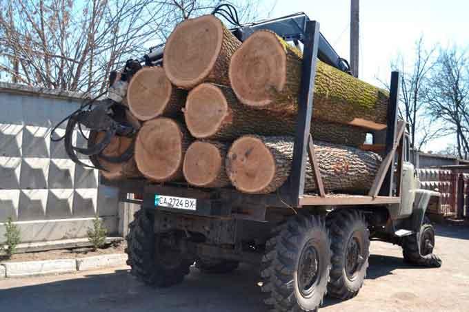 На Кам'янщині «чорні лісоруби» таранили автомобіль лісничого