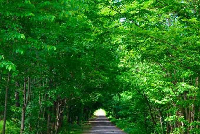 Містичний диво-тунель є в одному із лісів Черкащини