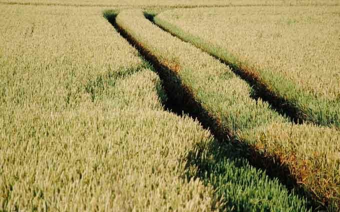 Аграрна галузь стала однією з провідних у вітчизняній економіці. Забезпечити її стабільну роботу покликане агрострахування, в тому числі, й індексне, яке віднедавна почало запроваджуватися в Україні. Серед тих, хто долучився до його активного поширення, - Проект IFC «Розвиток фінансування аграрного сектору в Європі та Центральній Азії».
