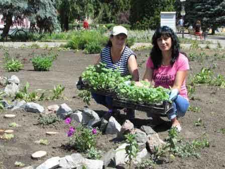 У Шполі висадять ще понад дві тисячі квітів