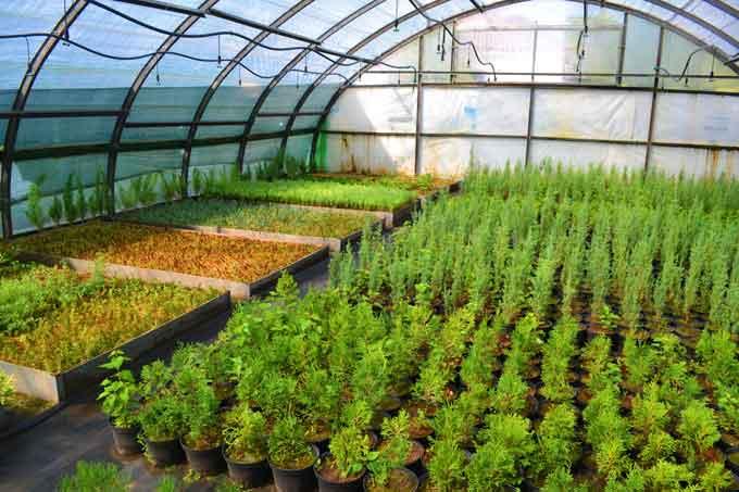 Понад 50 видів декоративних рослин вирощують у теплицях пехівського лісництва на Звенигородщині