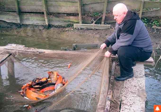 Аквафермер з Лисянщини реалізує близько 80 тонн риби на рік