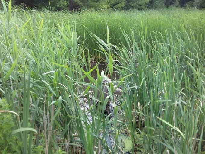 У Кам'янському районі рятувальники вилучили з водойми тіло загиблої людини (фото)