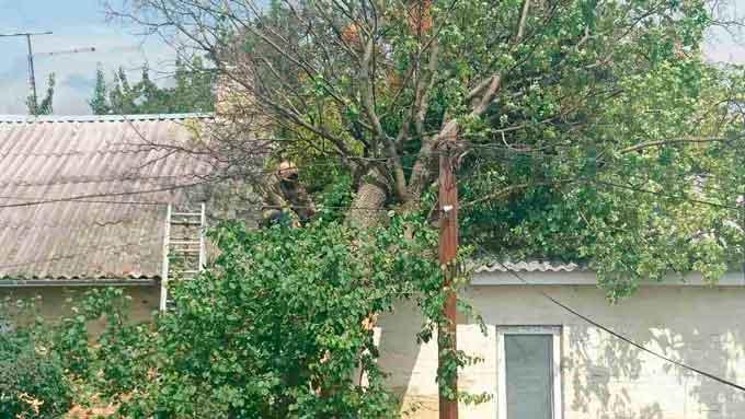 В Умані рятувальники прибрали повалені дерева